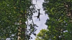 California- bungee jumping from a 200-foot tree outside of San Francisco.