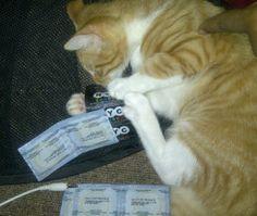Cat & Condoms