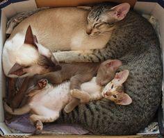 Family Photo in a hug box...
