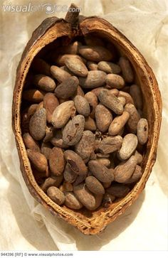 Google Image Result for http://www.visualphotos.com/photo/2x3683228/cocoa_beans_in_a_cacao_pod_944396.jpg
