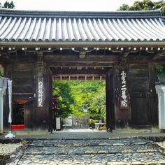 「そうだ 京都、行こう」のリアルロケ地!「小倉山二尊院」の紅葉が美しすぎる2016