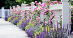 Sidewalk fence garden