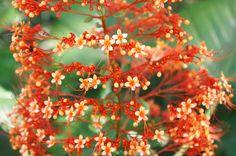Flowers of Inhotim