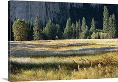 El Capitan meadow in the valley of Yosemite National Park, California, United States http://www.greatbigcanvas.com/