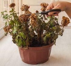Cum să readuci la viață orice plantă uscată? Doar 3 ingrediente simple fac minuni | Diverse, Timp Liber | Avantaje.ro - De 20 de ani pretuieste femei ca tine
