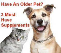 3 Most Important Health Supplements For Older Dogs And Cats  ... see more at PetsLady.com ... The FUN site for Animal Lovers