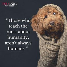 Those who teach the most about humanity, aren't always humans.