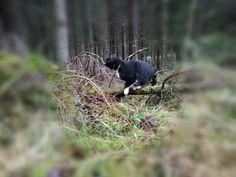 Kisu metsässä....