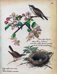 White throats and nests - Morning Earth Artist/Naturalist Edith Holden Edith Holden, Vintage Birds, Vintage Postcards, Nature Artists, Nature Journal, Spring Art, Antique Prints, Bird Prints, Botanical Prints