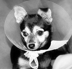 How to Care for a Dog After Neutering Surgery - The First 24 Hours