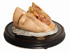 "Maison Tramond wax anatomical model- ""Model of hemi-head showing the course of cranial nerves"" Harry Brookes Allen Museum of Anatomy and Pathology Cranial Nerves, Vanitas, Memento Mori, 19th Century, Anatomy, Wax, Medicine, Culture, Model"