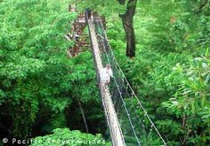 Canopy Walk in Falealupo on the Island of Savaii, I walked up on this...it was unbelievable..especially since I'm deathly afraid of heights!  But I DID IT!!