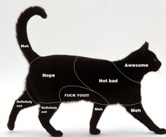 Petting chart for cats