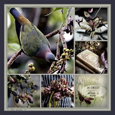 In Christ Alone, Bird Feeders, Earthy, Vibrant Colors, Fall, Outdoor Decor, Mood Boards, Collages, Beautiful