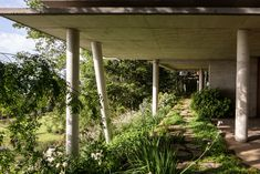 Stilted Apus House by Aguilo + Pedraza peeks through Chilean forest Exposed Concrete, Concrete Wall, Glass Walkway, Wooden Beams Ceiling, Bamboo Building, Clerestory Windows, Wooden House, Private Garden, House Front