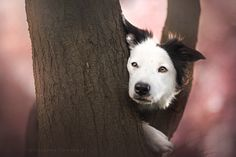 Windy Day by Alicja Zmysłowska on 500px