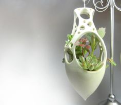 Peek-a-boo hanging planter with succulents