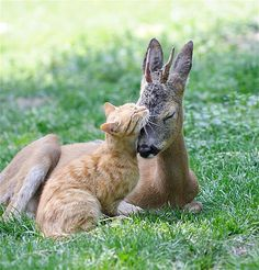 Image: Cat and deer (© Rex Features)