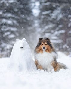 Am I a joke to you Linda? Identify theft is no joke Animals And Pets, Baby Animals, Cute Animals, Collie, Beautiful Dogs, Animals Beautiful, Shetland Sheepdog, Cute Animal Pictures, Sheltie
