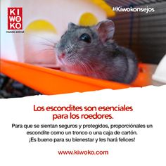 #Kiwokonsejo Ofrécele un lugar fresco y oscuro a tu pequeño roedor.