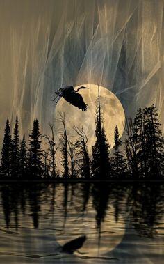 Grulla hacia la luna