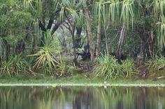 Annaburro Billabong - Northern Territory