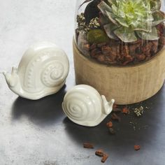 Ceramic Snail | west elm
