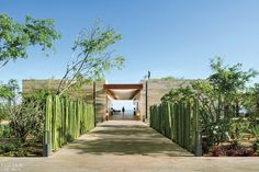 Cardón Barbón cacti form an allée leading to the entry of the beachfront Mako restaurant. Photography by Rafael Gamo.