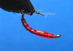 Threadless bloodworm
