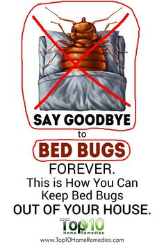 Here's How to Take Control & Get Rid of #Bed #Bugs from Your House