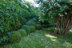 Den Passionerade Trädgårdsturisten: Uppstammad schersmin