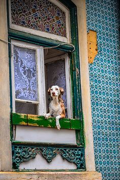 A Dog's Life in Alfama - Lisbon Portugal