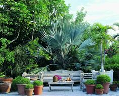 Beautiful palm, obviously the focal point but love the low bench style seating and the long round bolster cushions!