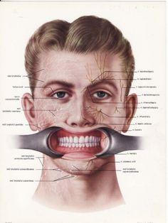 Teeth.