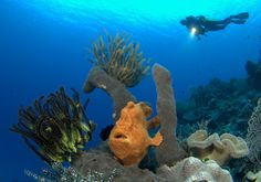 Wakatobi Dive Resort - unterwasser.de, Indonesia