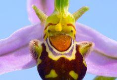 Le foto dei fiori più strani, curiosi, improbabili - Focus.it