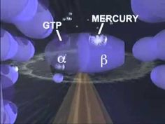 Just How Toxic is Mercury? - A Study by University of Calgary - YouTube