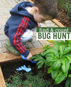 Hunt and count bugs.