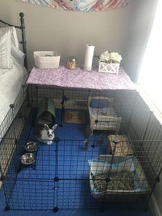 My bunny set-up Diy Bunny Cage, Rabbit Cage Diy, Rabbit Pen, Bunny Cages, Rabbit Cages, Pet Rabbit, Indoor Rabbit House, Indoor Rabbit Cage, Rabbit Hutch Indoor