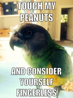 LOL (his name is Tim Tam. He is a Senegal parrot)