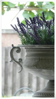 french urn with lavender