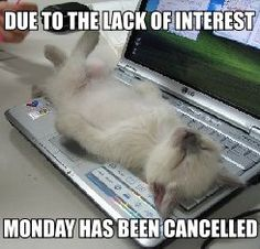 Oh #Monday! #Euroffice