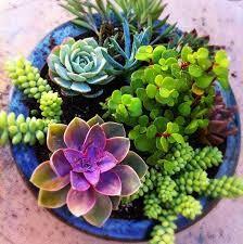 Resultado de imagen de mini jardin suculentas