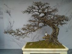 "Bonsai is a Japanese word, but the art of growing these trees originates in China, where it is called ""Penjing"". Orchid Plants, Cactus Plants, Air Plants, Orchids, Outdoor Plants, In China, Ikebana, Art Floral, Miniature Trees"