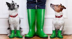 maitre et chiens avec des bottes vertes