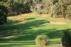 Lake Karrinyup Country Club Hole 1 Green Grass, Western Australia, Lush, Golf Courses, Wildlife, Characters, Cars, Country, Nature