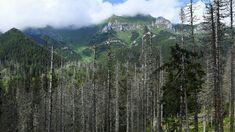 ..kôrovec v Tatrách... Mountains, Nature, Travel, Naturaleza, Viajes, Destinations, Traveling, Trips, Nature Illustration