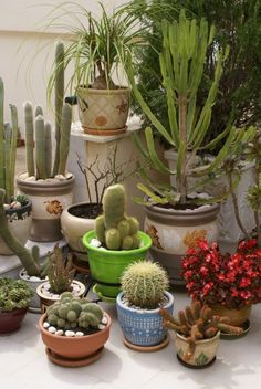 You can never have enough #houseplants and #cacti...