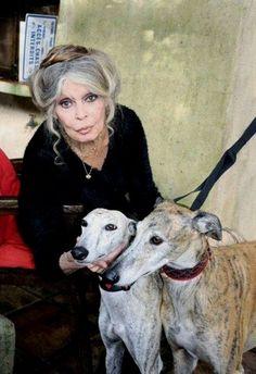Brigitte Bardot, chez elle, à La Garrigue (Saint-Tropez), avec des lévriers Galgos (en 2016).