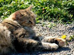 Litière bio pour chat pas chère   Pour une litière de chat 100% green et durable, voici une astuce vraiment simple et efficace.  J'achète des granulés bio pour poêle à granulés pour un peu plus de 4€ les quinze kilos. Je les utilise comme litière pour mes chats. Je peux ensuite les mettre dans un compost ou les jeter dans un coin du jardin.